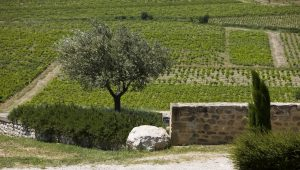 vineyard_cotes-du-rhone_wine-table