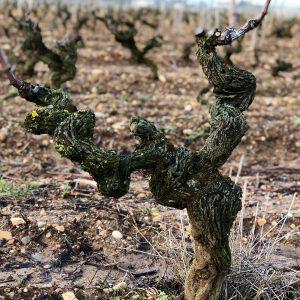 ranka_cotes-du-rhone_wine-table