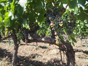 winetable_vinranka
